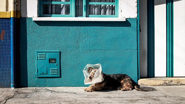 02-medico-veterinario-na-pet-shop