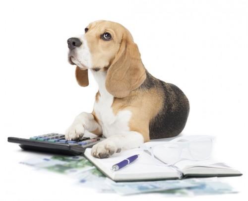Gestão financeira em pet shops