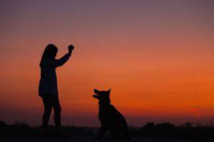 O guia da administração para pet shops: do treinamento de funcionários a estratégia