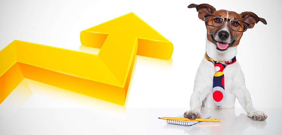 como administrar um pet shop