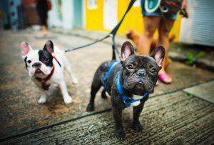Gestão de pet shops: saiba dominar os 5 pilares