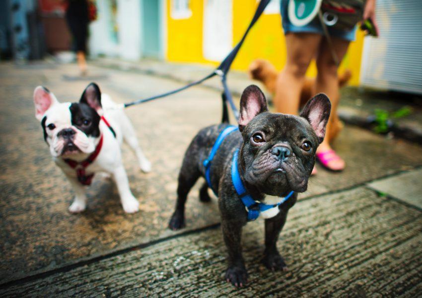 gestão de pet shops