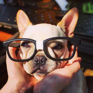 Saúde da sua Pet Shop: descubra com o termômetro de gestão