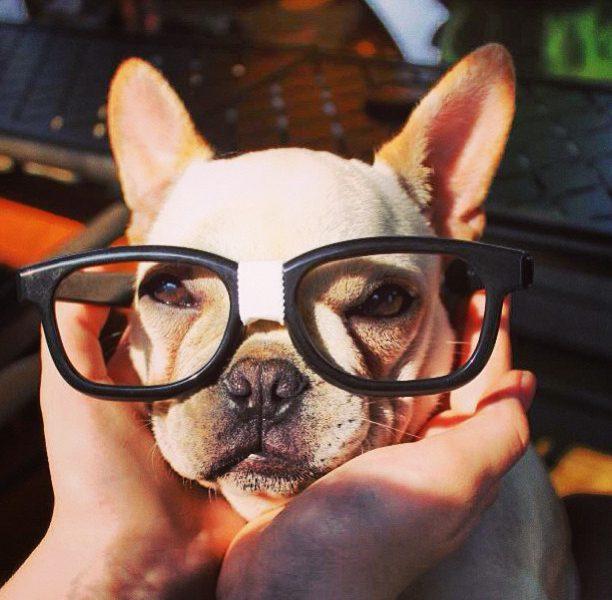 Facebook para pet shops: uma ferramenta eficaz de gestão de marca