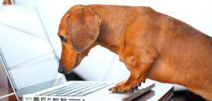 Atualizações Pet Shop Control – Fevereiro/2015