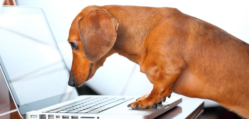 atualização pet shop control