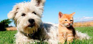 Bem-estar animal: auxilie seus clientes e fature mais