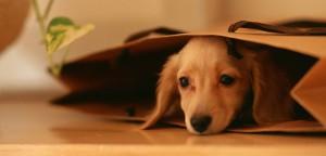 Como vencer o medo de abrir um Pet Shop