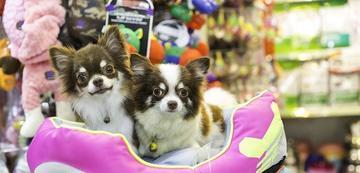 problemas pet shop