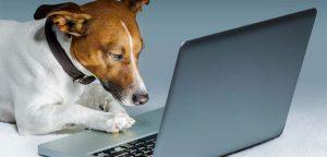 Cadastro de cliente Pet Shop: saiba como vender mais e fidelizar