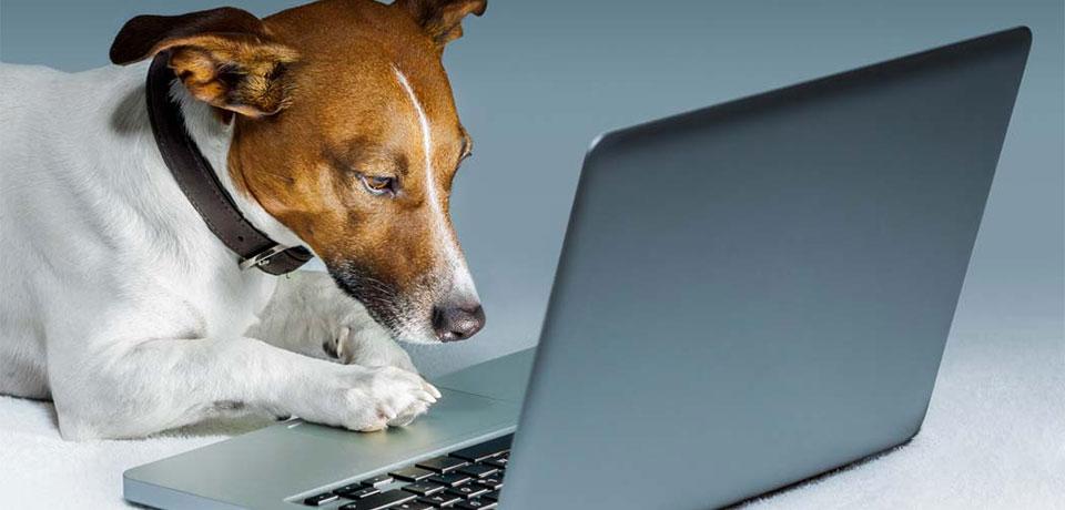 Cadastro de cliente Pet Shop