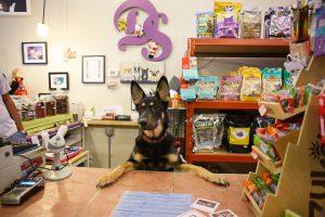 Como ter uma gestão de estoque incrível na minha pet shop?