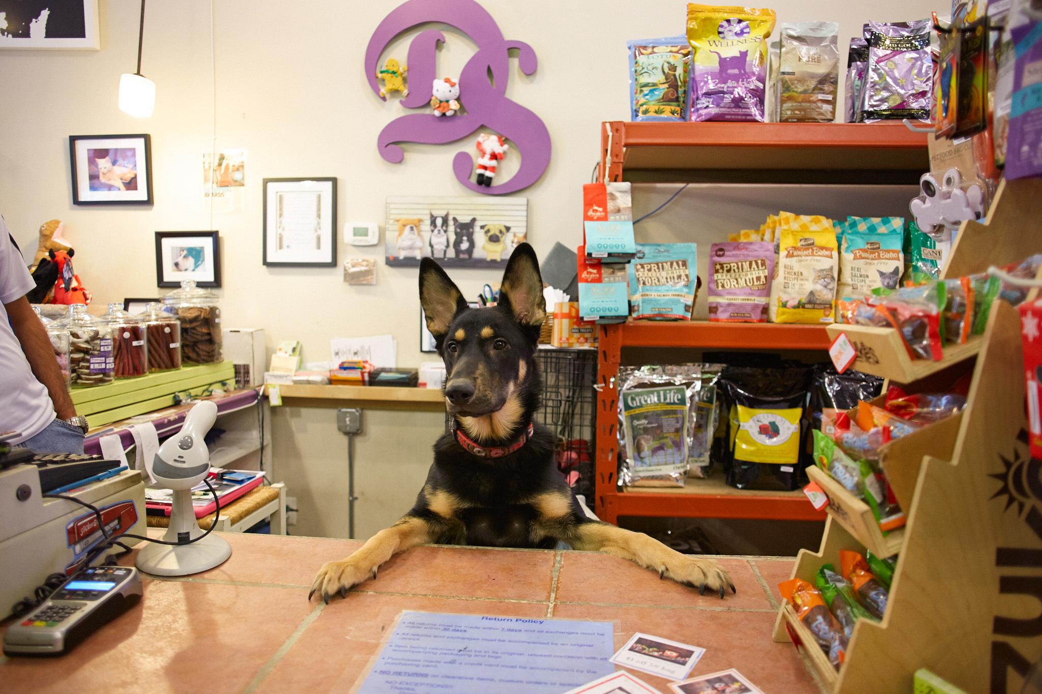 Dúvidas Pet Shop Control