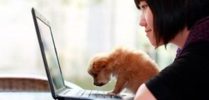 4 dicas para informatizar seu pet shop