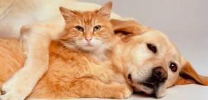 Fidelização dos clientes: como o Pet Shop Control pode te ajudar