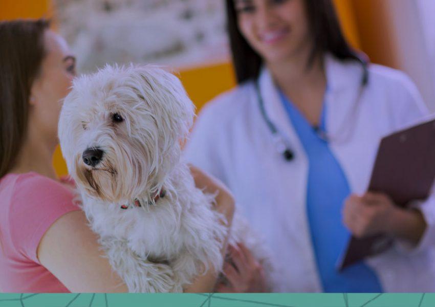 Gestão estrategica 9 dicas para torna la mais eficaz no pet shop