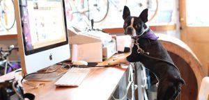 Gestão de finanças: saiba como manter o Pet Shop no azul