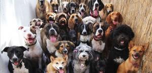 Pet Shop: passo a passo para atrair mais clientes