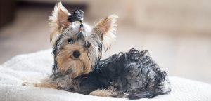 Hotel para cachorros e gatos: como montar o seu