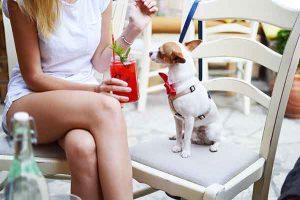 Humanização de pets: devemos tratar nossos animais como humanos?