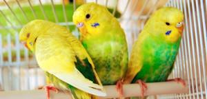 Por que investir no mercado de criação de pássaros para pet shops