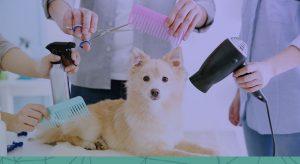 Pacote de serviços na pet shop: vale a pena?