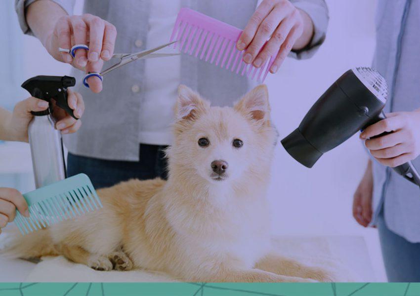 Pet Shop pacote de serviço vale a pena?