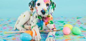 Como está o cenário econômico de pet shops? Descubra agora o que a Páscoa tem a ver com isso!