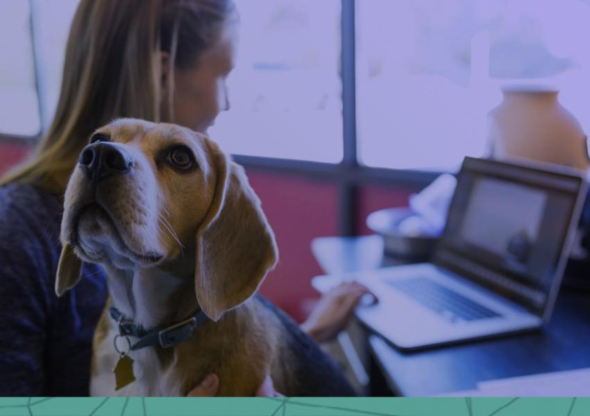 7 dificuldades que o empreendedor enfrenta no mercado pet!