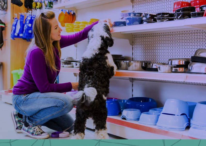 como aumentar a produtividade da minha pet shop