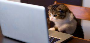 Pet Shop Online: veja como ampliar seu faturamento utilizando a internet