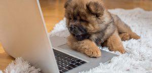 Plano de negócio pet shop: veja como a agenda de serviços pode ser fundamental