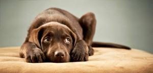 Como a economia em crise afeta o mercado de pet shops?