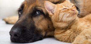 Gestão de Pet Shop: guia para vender mais