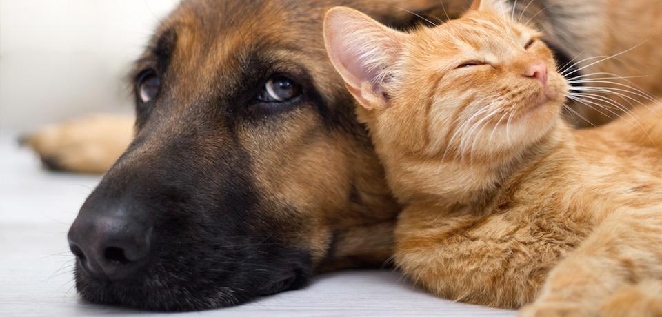 gestão pet shop