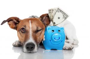 Como ter um controle financeiro incrível na minha pet shop?