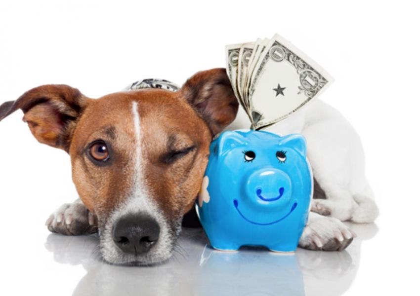 financeiro-controle-pet-shop