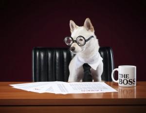 Um sistema de gestão pode salvar a sua pet shop