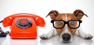Tele busca e tele entrega: mais valor para a gestão do pet shop
