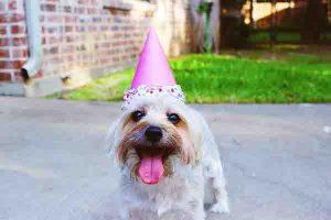 cachorro fazendo aniversário