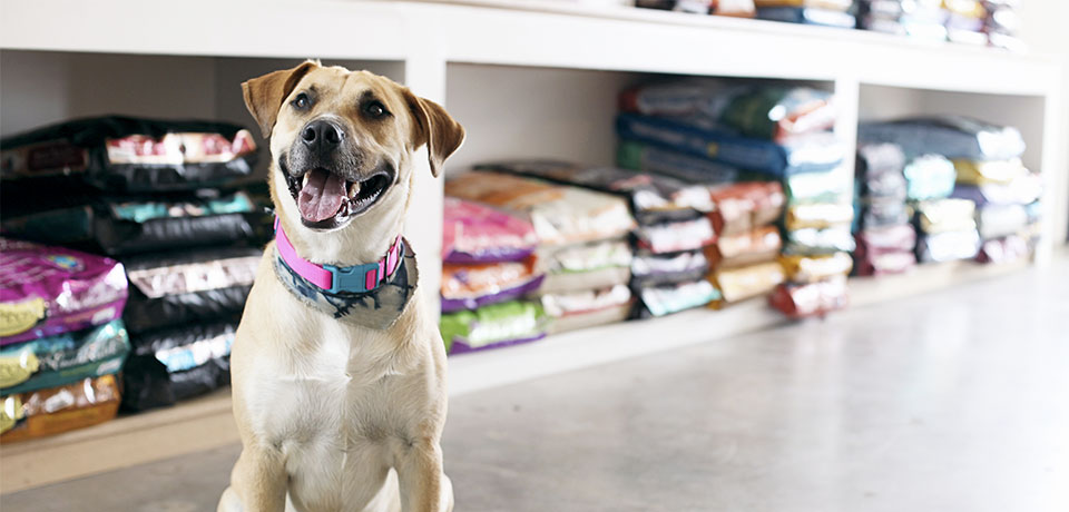 App para pet shop