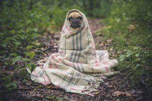 A importância da rotina de banho em pets no inverno