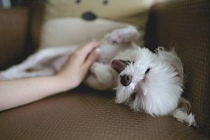 10 dicas para um bom atendimento na sua pet shop