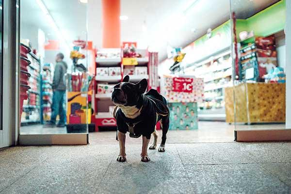 cachorro-na-pet-shop-meta-de-vendas