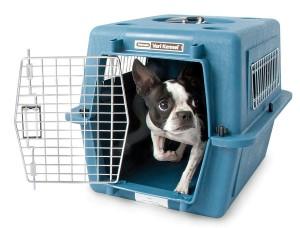 Saiba tudo sobre o tele-busca em pet shop e evite erros