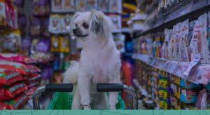 Produtos vencidos na pet shop: você sabe quais problemas podem surgir?