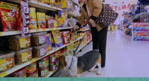 7 dicas para você realizar a reposição de estoque da sua pet shop corretamente!