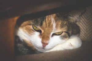 [PALESTRA] Marketing de Serviços para Pet Shops: conheça a estratégia