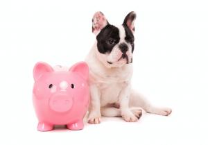 Recuperação tributária para pet shop