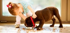 Controle de estoque para pet shop: um guia completo!